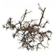 Okras za terarij - naravni puščavski grm, 15 do 20 cm