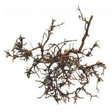 Okras za terarij - naravni puščavski grm, 25 do 40 cm