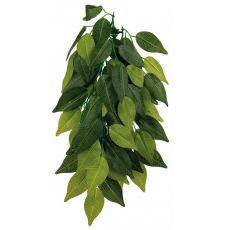 Terarijska rastlina FIKUS - viseča, 20 x 50 cm