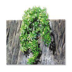 Terarijska rastline TerraPlanta Cannabis – 65 cm