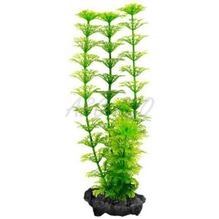 Rastlina Tetra Ambulia, S – 15 cm