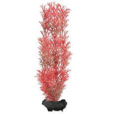 Tetra akvarijska rastlina – Red Foxtail M, 23 cm