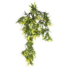 Terarijska rastlina Croton, 30 cm