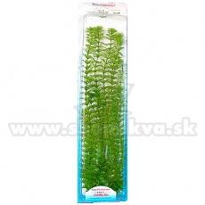 Limnophila sessiliflora (Ambulia) - rastlina Tetra 46 cm