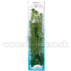 Cabomba Caroliniana (Green Cabomba) - rastlina Tetra 38 cm, XL