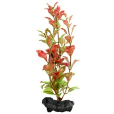 Ludwigia Repens (Red Ludwigia) - rastlina Tetra 15 cm, S