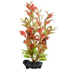 Ludwigia Repens (Red Ludwigia) - rastlina Tetra 30 cm, L
