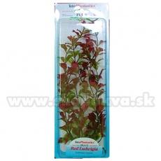Ludwigia Repens (Red Ludwigia) - rastlina Tetra 38 cm, XL