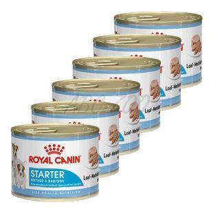 Royal Canin Starter Mousse 6 x 195 g