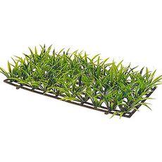 Sagitaria Platyphylla - rastlina Hobby, višina 5 cm