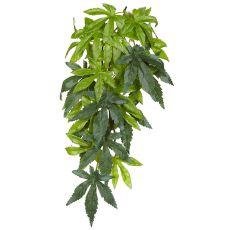 Abutilon Silk Small - rastlina za terarij