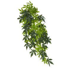 Abutilon Silk Large - rastlina za terarij