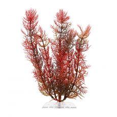 Plastična rastlina Tetra Red Foxtail, S 15 cm