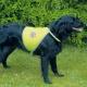 Odsevni jopič za pse - S