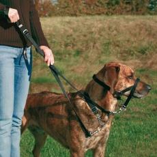 Vzgajalna pasja ovratnica z nagobčnikom - S, 22 cm
