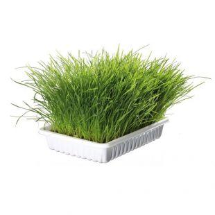 Mačja trava 100 g