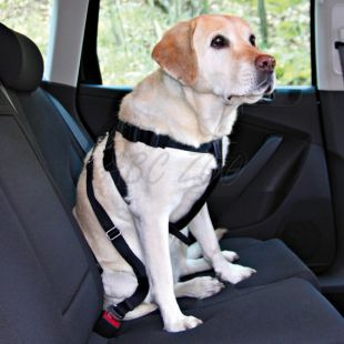 Varnostna oprsnica za psa za varno vožnjo - S, 30-60 cm