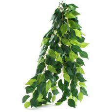 Ficus silk medium - rastlina za terarij, 55cm