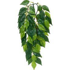 Ficus silk small - rastlina za terarij, 45cm